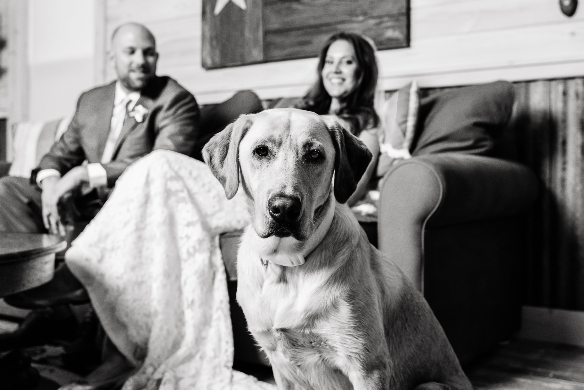 Austin Wedding Photographer Portrait Dog Lab Texas